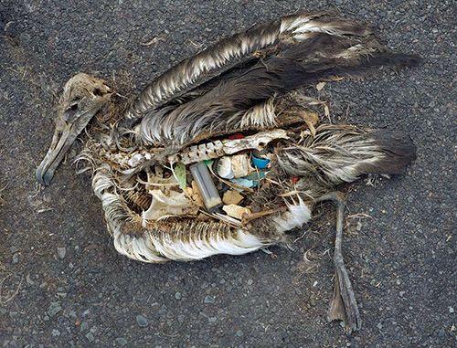 lixo e aves marinhas.jpg